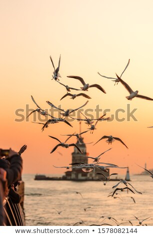 Seagull and Maiden Tower Stock photo © Givaga