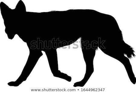 Cartoon rottweiler courir illustration animaux graphique Photo stock © cthoman