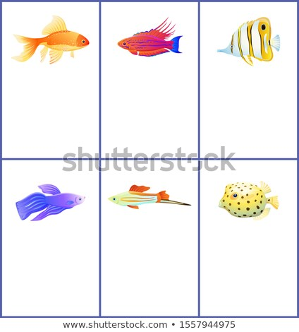 Set of Marine and Domestic Fishes Color Banners Stock photo © robuart