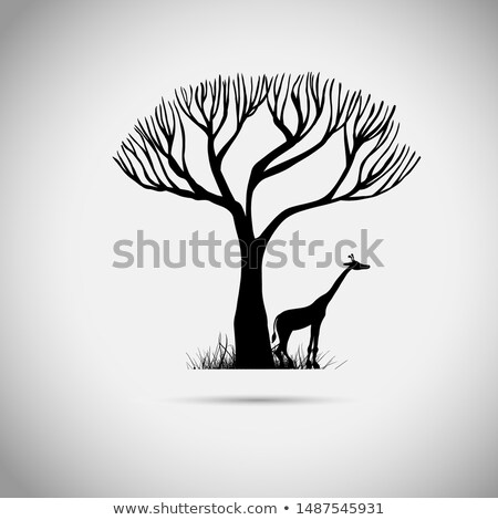 giraffe under a tree in african savanna Stock photo © dolgachov