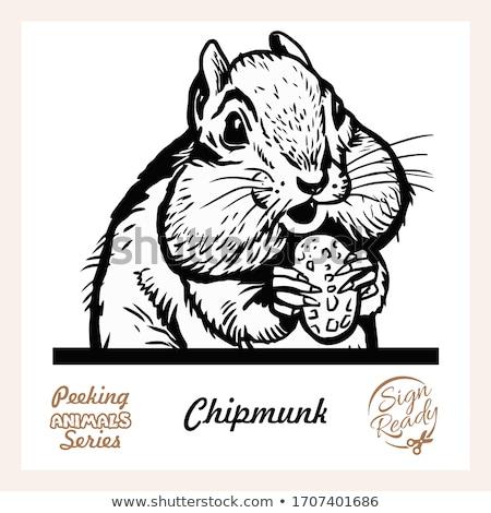 Karikatür çizgili sincap örnek hayvan üst vektör Stok fotoğraf © cthoman