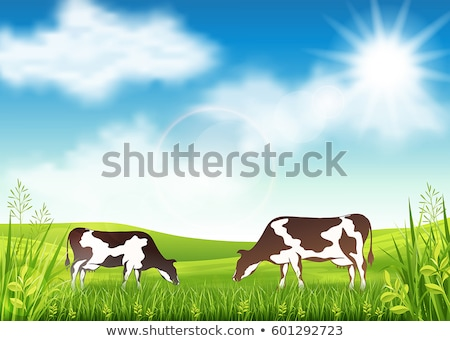 Spotted Cow Graze on Lawn Vector Illustration Stock photo © robuart