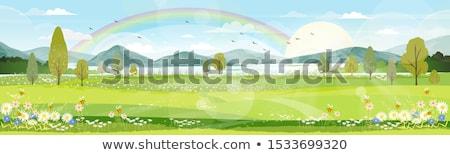 Regenboog voorjaar bergen landschap sparren Stockfoto © Kotenko