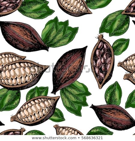 avelã · vetor · ilustração · conjunto · natureza - foto stock © frescomovie