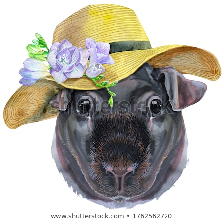 watercolor portrait of pig with summer hat stock photo © natalia_1947
