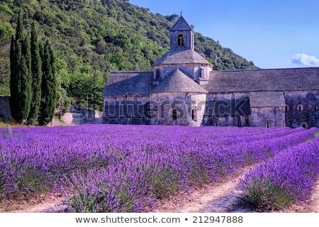 abdij · lavendel · veld · Frankrijk · wereld · beroemd - stockfoto © neirfy