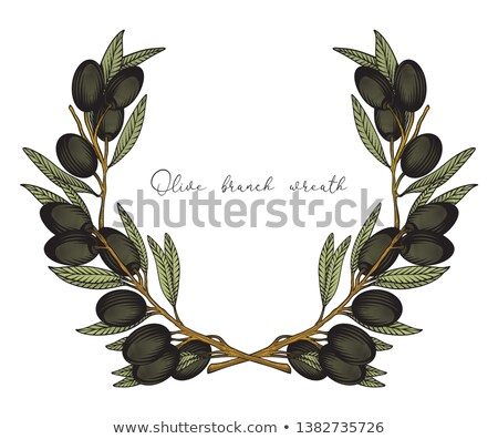 Color Cosmetic Ingredient Olive Branch Vintage Vector Stock photo © pikepicture