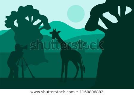 Fotógrafo fotos caminhada girafa África africano Foto stock © barsrsind