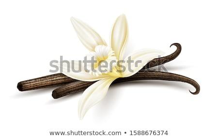 Vanilya çiçek kurutulmuş gerçekçi gıda bileşen Stok fotoğraf © LoopAll