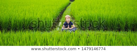 Stock photo: Little boy practices yoga in a rice field, outdoor. Gymnastic exercises BANNER, LONG FORMAT
