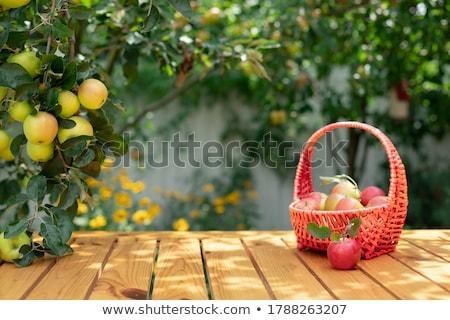 appels · peren · houten · tafel · najaar · bokeh · boom - stockfoto © restyler