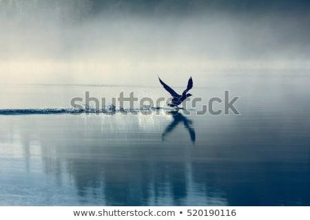 puslu · iniş · jet · ışıklar · kış · sis - stok fotoğraf © bobhackett
