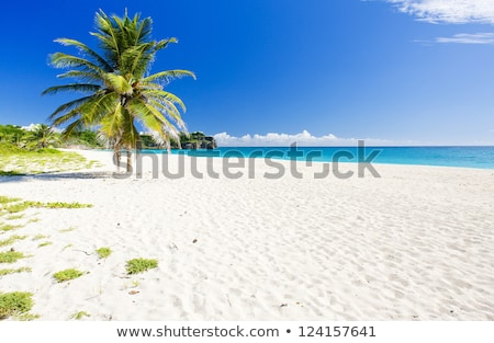 Barbade · Caraïbes · arbre · paysage · mer · Palm - photo stock © phbcz