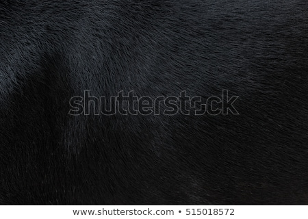 black fur stock photo © dolgachov