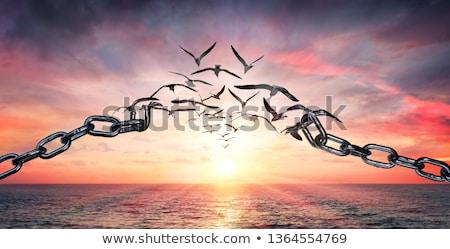 libre · heureux · femme · ouvrir · bras · liberté - photo stock © zittto