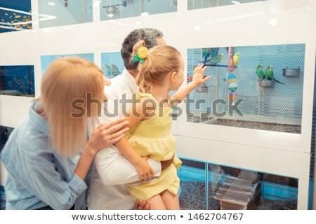 Wife Parrot. Stock photo © RAStudio
