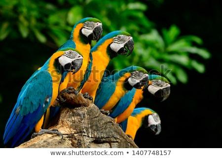 vicces · papagáj · rajzfilmfigura · izolált · fehér · vektor - stock fotó © RAStudio