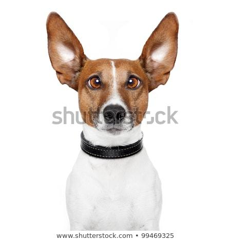 Gek hond ogen appel grappig dier stockfoto javier brosch damedeeso 2334318 - Ogen grappig ...