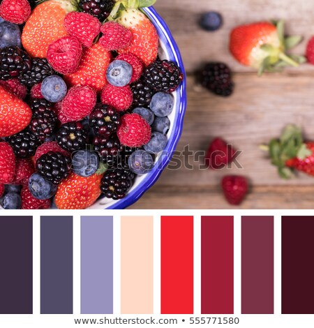blackberries colour palette swatch Stock photo © REDPIXEL