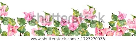 çiçekler renkli tropikal bahçe çiçek bahar Stok fotoğraf © ruzanna