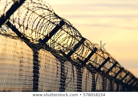 barbed wire with fence against the sky stock photo © olinkau