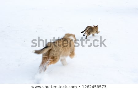 Dog puppies fight in snow Stock photo © inarts