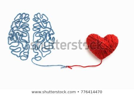 heart brain stock photo © lightsource