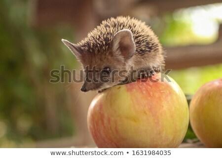 kirpi · elma · gülümseme · doğa · sanat · eğlence - stok fotoğraf © Genestro