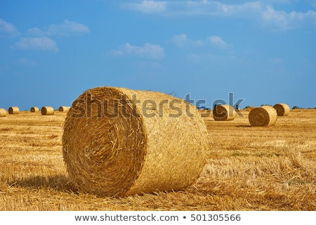 széna · kék · ég · boglya · mező · ősz · égbolt - stock fotó © tainasohlman