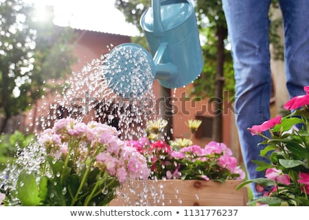 flores · regadera · tulipán · silla · interior · blanco - foto stock © iko