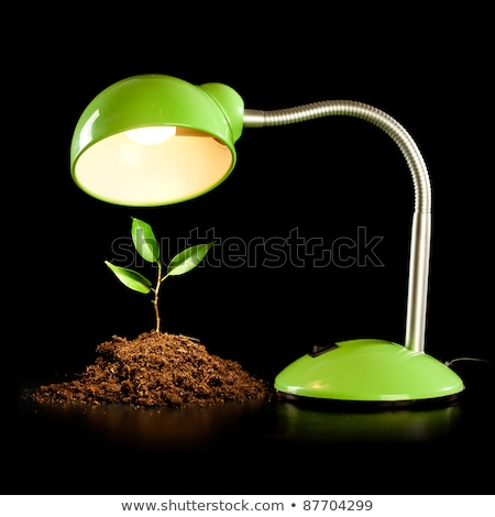 young sprout and table lamp on a black background stock photo © d13