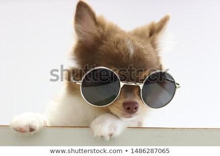 Kutya ül nap fiatal néz édes Stock fotó © c-foto
