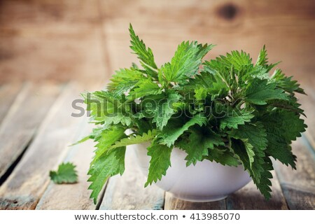 stinging nettle on a wooden background Stock photo © Virgin