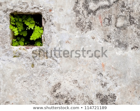 green grass grow on the holes of cement brick stock photo © nalinratphi