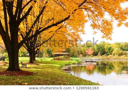 Banco outono parque paisagem madeira jardim Foto stock © mahout