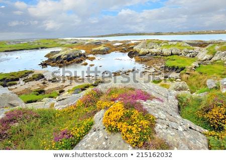 Írország tájkép hdr nyár idő tengerpart Stock fotó © mady70