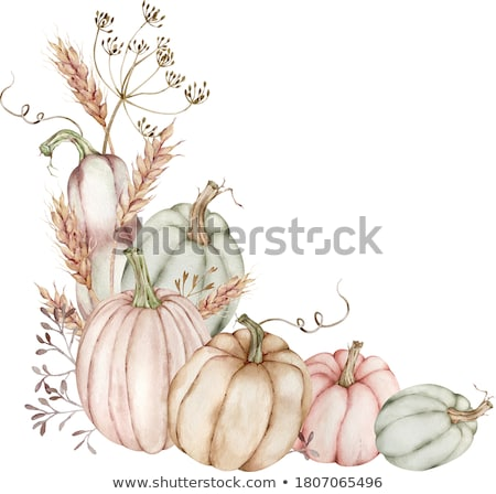 green gourd  Stock photo © designsstock