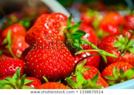 Orgânico morangos crescente jardim comida fruto Foto stock © Moravska