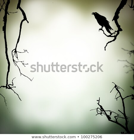 Scary Crow On A Branch Stock photo © Lightsource