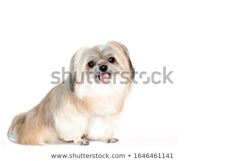 Cute мало собака семьи щенков играет Сток-фото © kasto