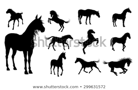 horse silhouette in gallop pose stock photo © istanbul2009