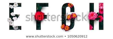 a flower and a letter f stock photo © bluering