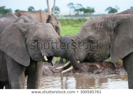 Bonding elefantes parque África do Sul fundo viajar Foto stock © simoneeman