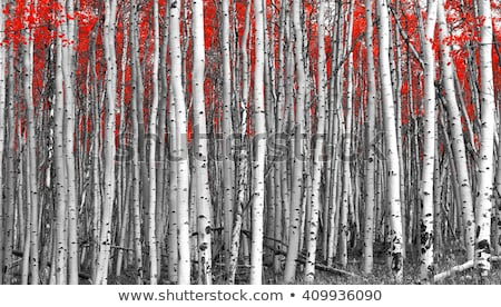 Autumn Landscape with birch forest in the mountains Stock photo © Kotenko