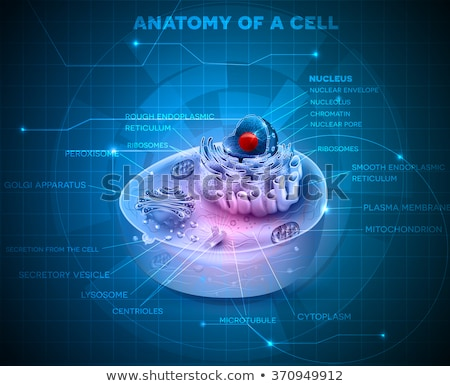 Golgi apparatus abstract technology background Stock photo © Tefi