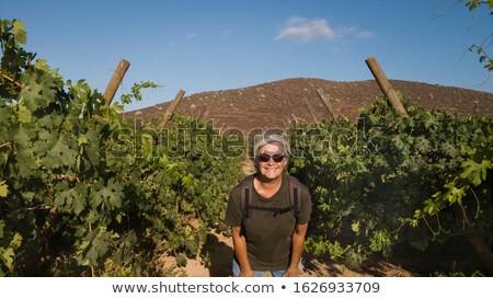 woman looking at grapes on vine stock photo © is2