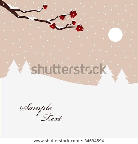 Piros bogyók ágak hegy hamu tél Stock fotó © orensila