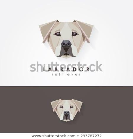 Hond labrador mascotte redding illustratie cute Stockfoto © lenm