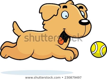 Cartoon Золотистый ретривер мяча иллюстрация улыбаясь графических Сток-фото © cthoman