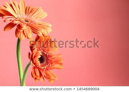 Abstract super macro shot arancione fiore Foto d'archivio © fyletto